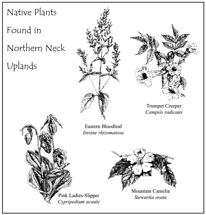Native-Plants-of-Uplands-NNK