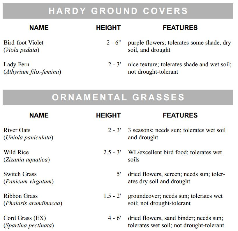 hardy-ground-covers2