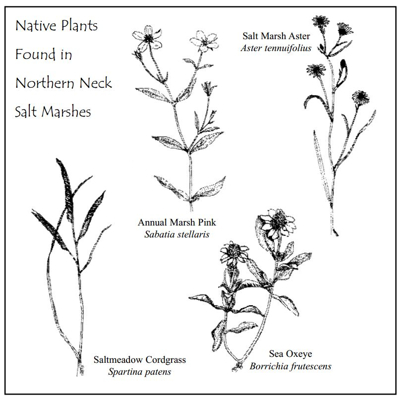 native-plants2