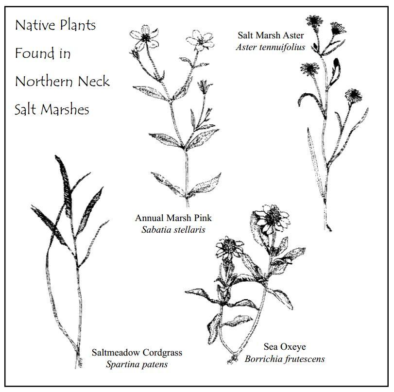 native-plants2