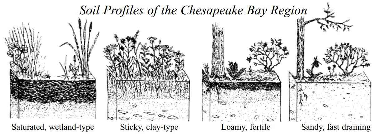 Soil-Profiles