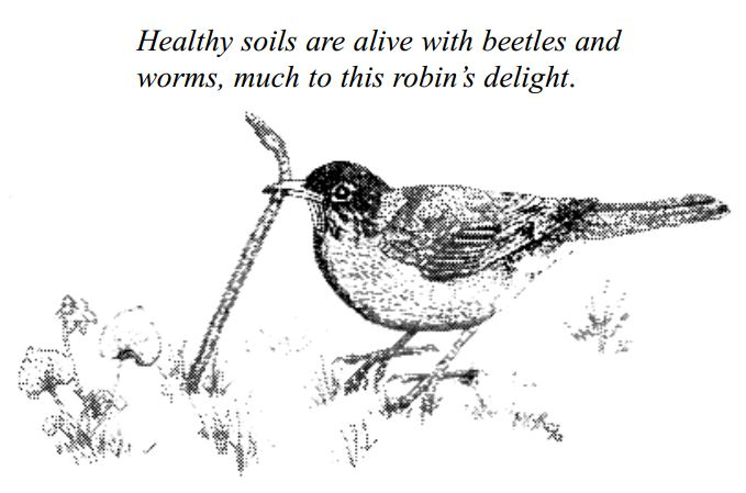 robin-and-worm