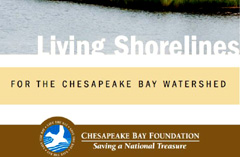Living Shorelines Brochure