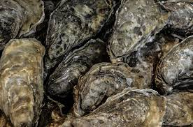 Growing Oysters at Home Can Help Keep Our Local Waters Clean