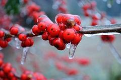 caiceon-berriessmall