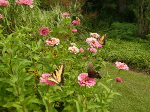 Pollinator Garden on display NOW