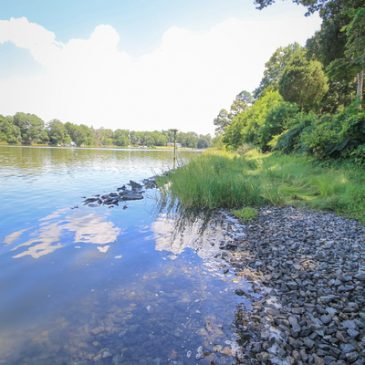 Shoreline Landscaping: The Good, The Bad and The Ugly –  June 8, 2018