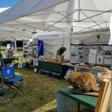 Wildlife Refuge at the Farnham Country Fair