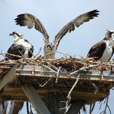 Help the breeding birds in the NNK be a part of the VA Breeding Bird Atlas!