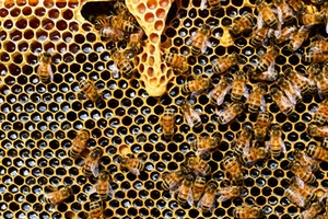 High Demand for Beehives