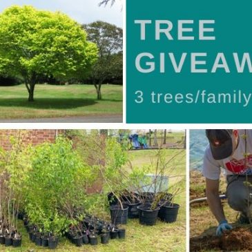 Free Tree Giveaways in Lancaster & Warsaw