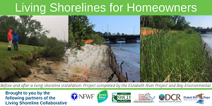 Living Shorelines for Homeowners Webinar