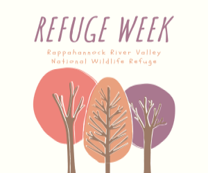 "One red, one orange, and one purple cartoon trees are underneath text that reads, ""Refuge Week: Rappahannock River Valley National Wildlife Refuge."""