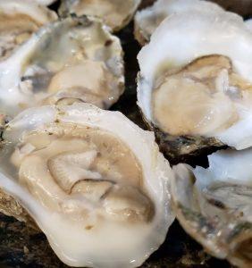Restoring the Tidal Rappahannock: Oysters & Living Shorelines